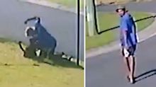 Search for man after video emerges of brutal attack on dog