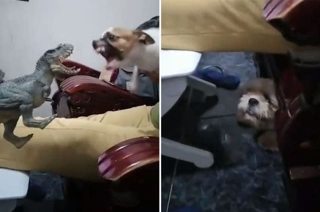 Dogs react to toy dinosaur