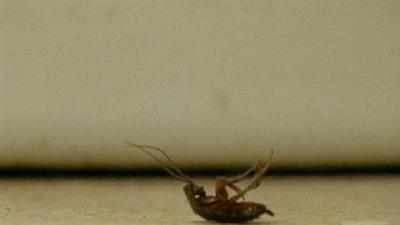 Roach Infestation Closes Down Motel