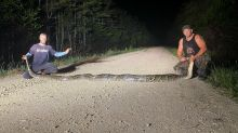 Capturan pitón de más de 6,1 metros de largo a 56 kilómetros de Miami