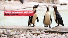 Iconic Gay Penguins And Their Pals To Celebrate Pride At London Zoo