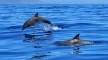 Prises accidentelles de dauphins : la ministre de la Mer promet plus de contrôles
