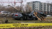 Driver dies after slamming into tree next to Memorial Drive