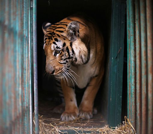 'The worst zoo in the world' closes