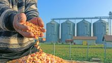 3 Top Corn Stocks to Consider Buying Now