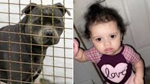 Toddler mauled to death after crawling close to pet dog's bowl