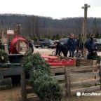 Unusually wet season kills Christmas trees