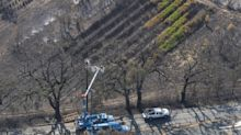 PG&E Took 8 Months to Prune a Tree at Risk of Catching Fire
