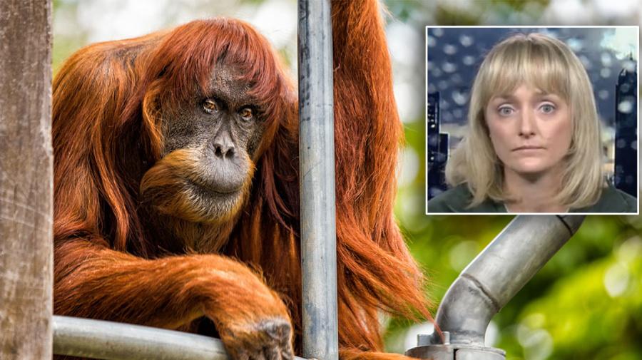 Zookeeper's heartfelt tribute after world's oldest orangutan dies