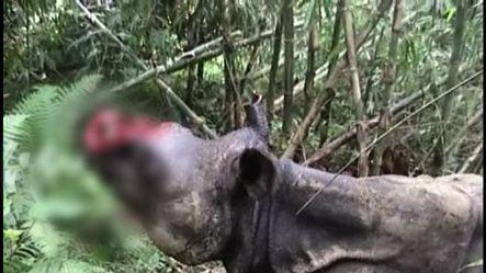 Stray Kaziranga Rhino killed for horns