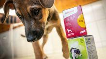 Milliarden für den Schuldenabbau: Bayer verkauft die Tiermedizin