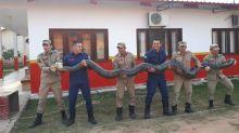 Sucuri de seis metros e 100 quilos é capturada no Acre