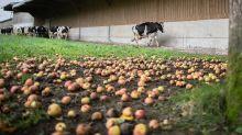 Après Lubrizol, les agriculteurs peuvent à nouveau commercialiser tous leurs produits