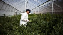 IPO market faces busy week that includes first cannabis cultivator to list on Nasdaq