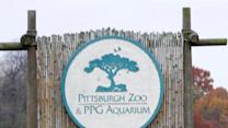 Wild dogs kill 2-year-old boy at Pa. zoo exhibit