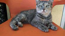 Reubican a gatos de refugios azotados por Michael en Florida