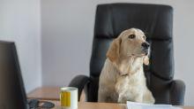 Y cuando crees haberlo visto todo… nombran a un perro como alcalde
