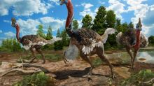 New species of dinosaur found in China - and it looks like a turkey