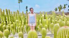 沙漠奇景台灣也有 仙人掌花園IG打卡新地標