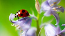 Nos conseils pour faire facilement un jardin écolo