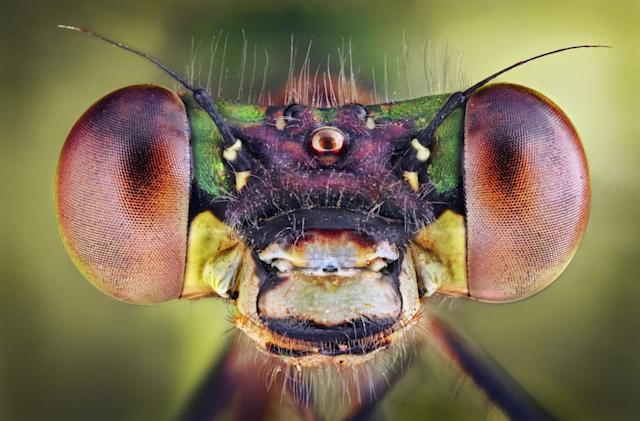 Researchers develop multifaceted insect eyes for UAVs