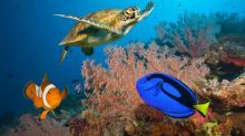 Great Barrier Reef to get $60m rescue package from government