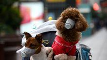 Coronavírus: cão de mulher infectada testa positivo para o vírus