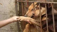 A 'epidemia de abandono' dos animais de estimação causada pela crise do coronavírus
