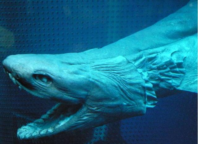 10 Deep Sea Creatures That Prove Aliens Are Here on Earth