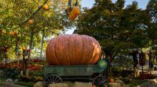 Busch Gardens® Williamsburg Retains Prestigious Title As World's Most Beautiful Park