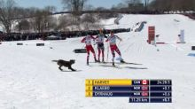 Watch: Dog gets loose during ski race, trots along with leaders