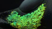 Une larme vue au microscope et autres merveilles de l'infiniment petit