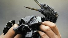AP PHOTOS: Exxon Valdez oil spill inflicted lasting wounds