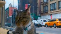 Pop-Up Cat Cafe