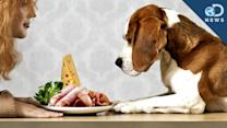 Can Dogs Eat People Food? - DNews