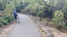 'Posse of bandits.' Father, son encounter 14 raccoons at Golden Gate Park, video shows