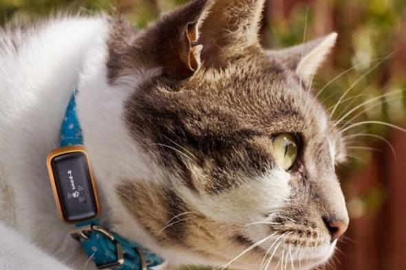 """<p>For anyone who has ever wondered where their pet goes all day - or whose animal has a habit of wandering off - fear not because now you can track it.</p>  <p>The G-Paws GSP tracker fits on their collar so that no matter where they roam, you can easy track them down. <a href=""""https://www.firebox.com/"""" target=""""_blank"""">Firebox.com</a> also points out it's handy for tracking a trail of destruction, or for keeping tabs on your dog walker too.</p>"""