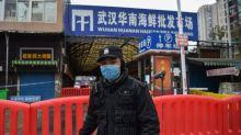 El animal que al comerlo pudo provocar la difusión del coronavirus mortal en China