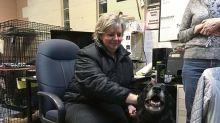 Desaparecida há 10 anos, cadela surpreende família ao voltar para casa