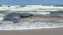 'Absolutely disgusting' twist after whale washes up on NSW beach