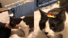 賓士貓目睹「奴才背叛現場」 瞬間悲憤大哭:你怎麼敢!?