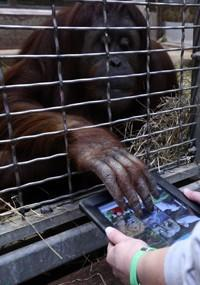 Smithsonian Zoo launches 'App for Apes' iPad project