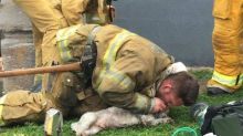 Firefighter revives 'lifeless' dog with 'mouth to snout' resuscitation