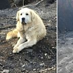 The incredible story behind this dog who refused to leave fire-ravaged home