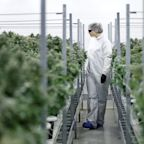 Analyst raises Canopy Growth from neutral to buy