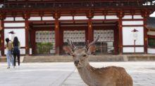 En Japón acaban de crear bolsas que pueda comerse la fauna