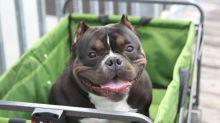 Cada vez más gente asegura a su mascota en caso de fallecimiento