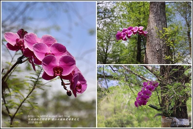 雲山水植物農場鳶尾花-2018-04-42.jpg