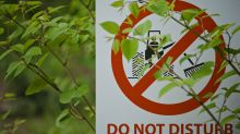 The plants costing UK homeowners over £10,000 to remove