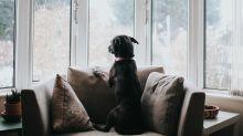 So lange darfst du deinen Hund allein zu Hause lassen